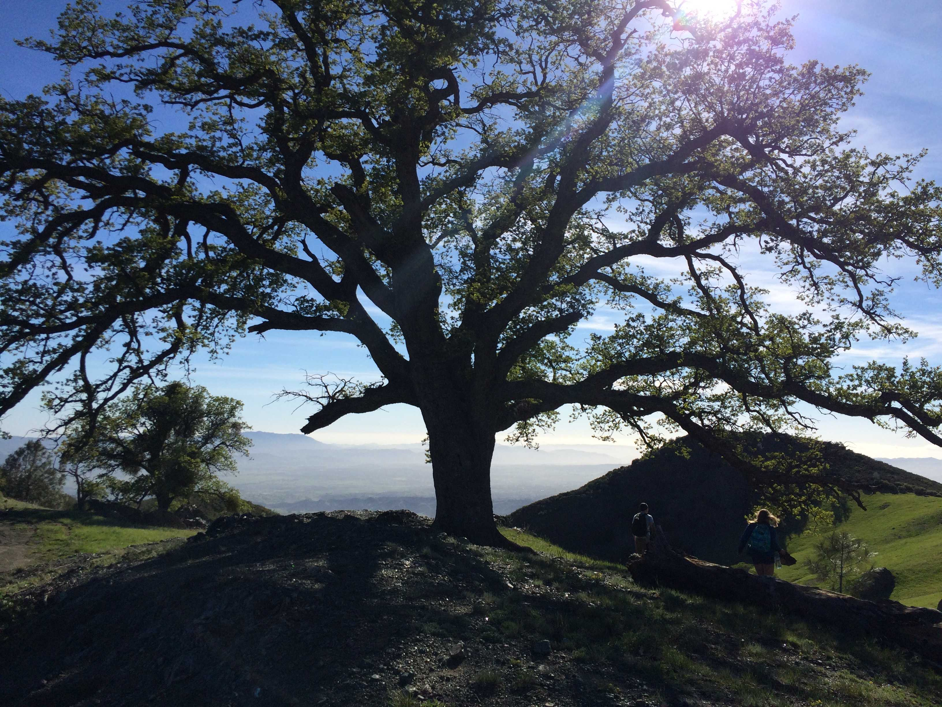 Figueroa Mountain. Photo Credit: Meghan Schuyler / The Foothill Dragon Press.