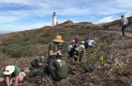 Students garden on Anacapa Island. Credit: Noah Hilles / The Foothill Dragon Press
