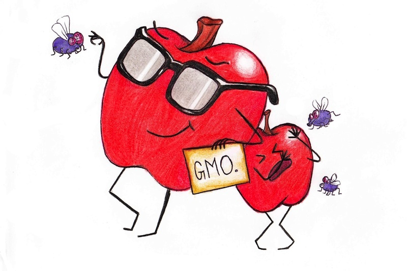 Our fear of GMOs is completely unnecessary