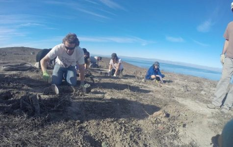 Environmental Club preserves native species on Anacapa Island trip