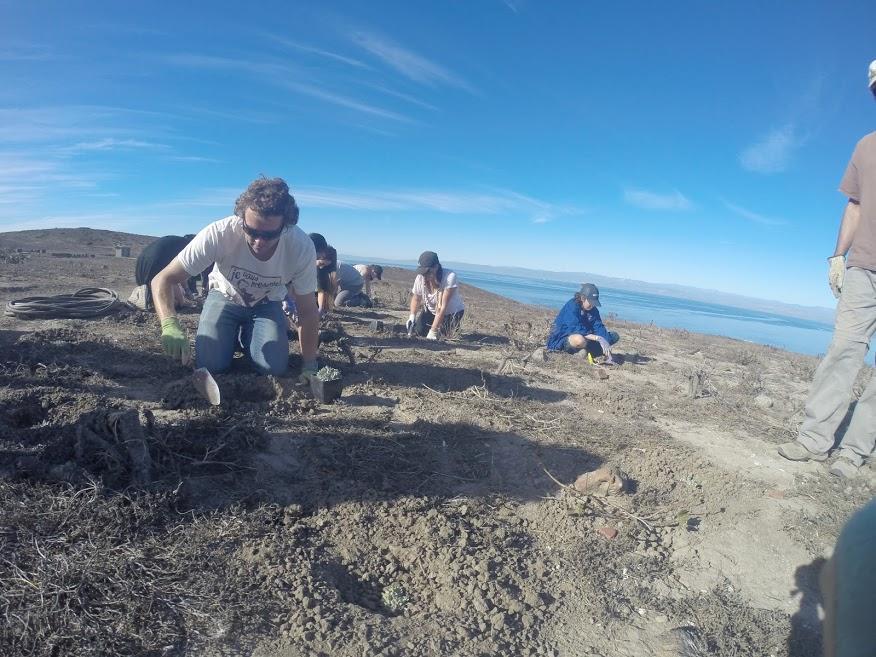 Environmental Club preserves native species on Anacapa Island trip