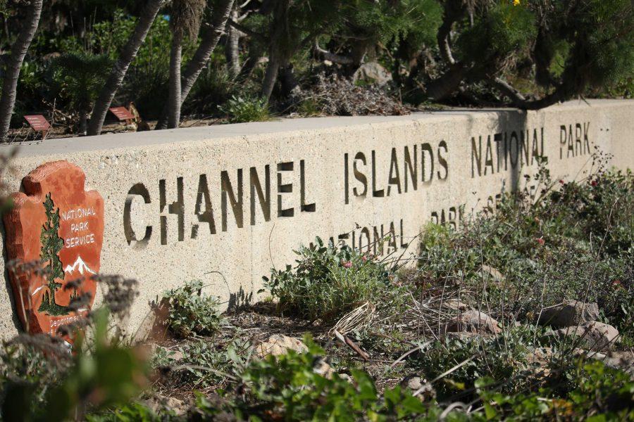 Island Fox Triumphs (8 photos)