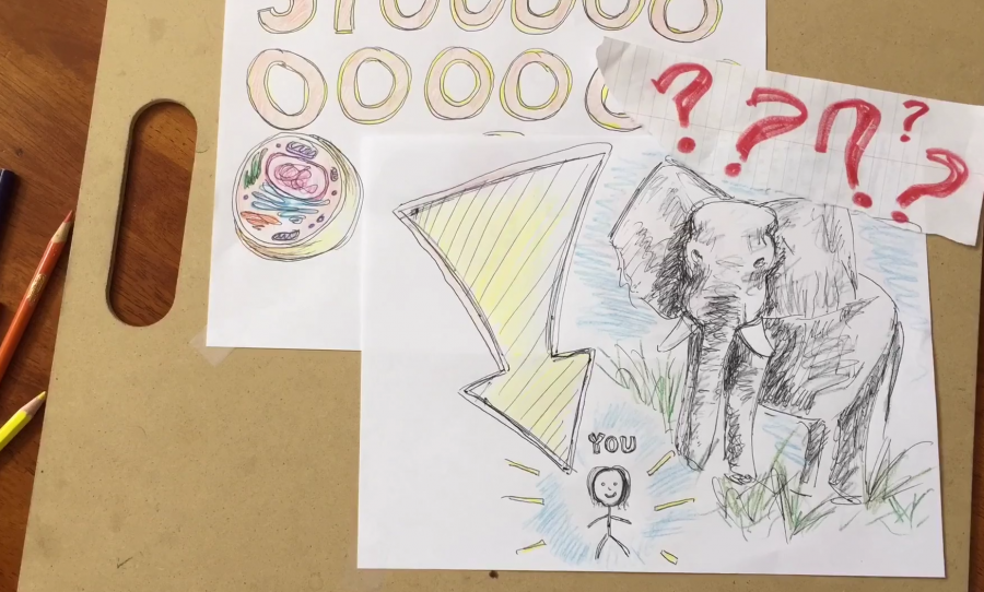 Until recently, there was little known about why elephants so rarely get cancer. Credit: Rachel Chang / The Foothill Dragon Press
