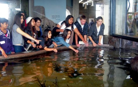 AVID students visited the Monterey Bay Aquarium during their trip to northern California. Credit: Jocelyn Rodriguez/The Foothill Dragon Press.