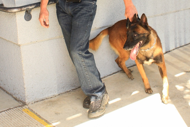 A drug-sniffing dog searched four classrooms today and two students were pulled out of class due to an alert on their belongings. Credit: Aysen Tan/The Foothill Dragon Press