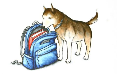 Drug-sniffing dogs are now being allowed into the classroom. The first search occurred on March 22. Credit: Claire Stockdill/The Foothill Dragon Press